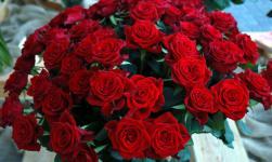 roser stell