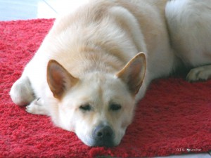 Bürohund Balin. Fotoquelle D. Neureiter.