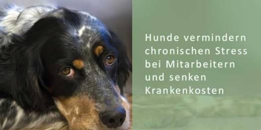 Ein Bürohund senkt die Gefahr von chronischem Stress