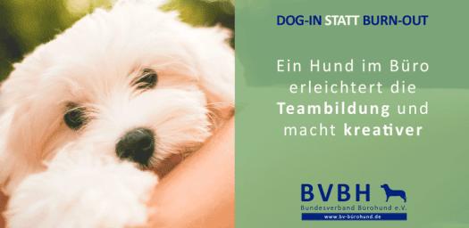 bürohund-teambildung_
