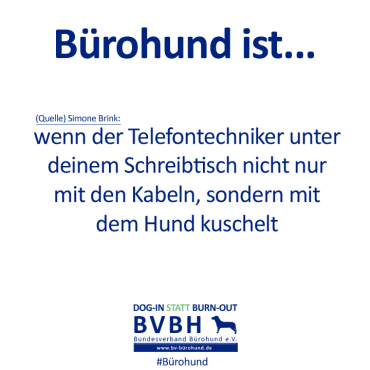 B-Hund_ist_Brink