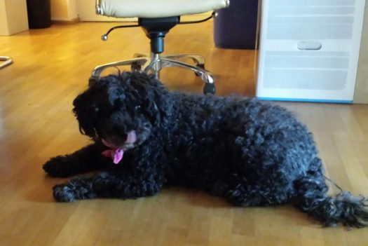 Welthundetag 2016 - Bürohund Piri