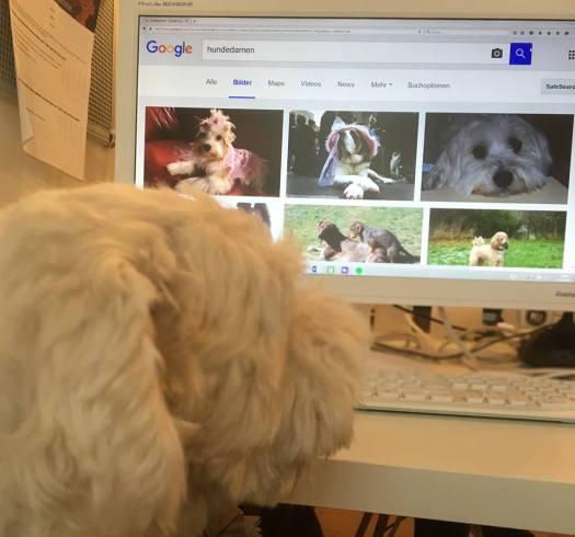 Welthundetag 2016 - Bürohund Flocke