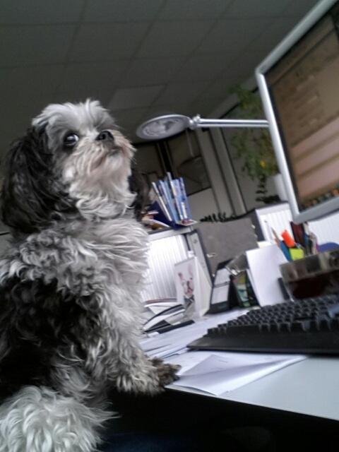 Welthundetag 2016 - Bürohund Funny