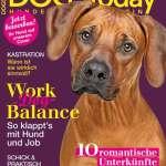 Bürohund Interview mit Markus Beyer