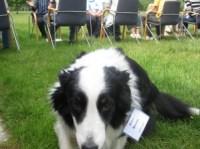 Bürohund bei der Lurse AG