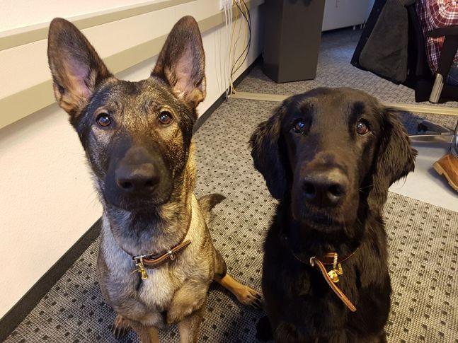 Bürohund bei Tasso: Loony und Guiness