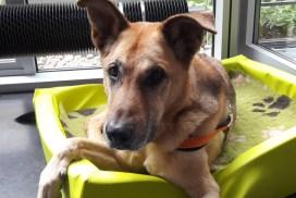 Medisinn Bürohund: hundefreundliche Unternehmen