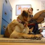 Bürohundtag: Ute Vogt MdB