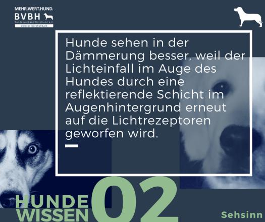 Hundewissen Bürohund: Der Lichteinfall im Auge des Hundes wird durch eine reflektierende Schicht im Augenhintergrund erneut auf die Lichtrezeptoren geworfen. (1)