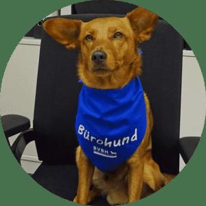 BVBH-Support für Unternehmen mit Bürohund