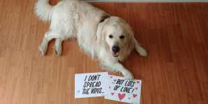 Dogs: We speadr Love - Not the virus