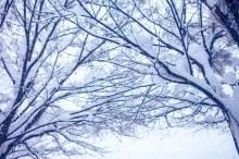 寒中見舞い 時期