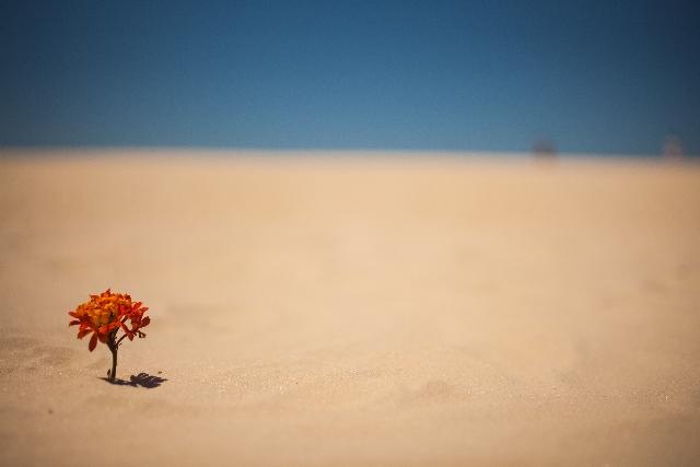 黄砂 時期 ピーク