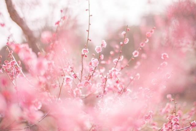 春暖の候 時候の挨拶
