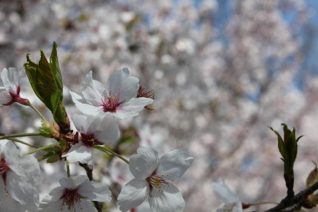 春うらら 意味 由来