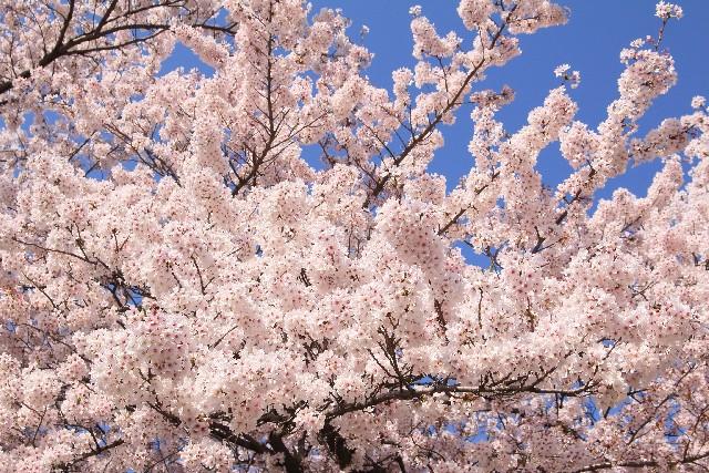 陽春の候 意味 時期