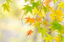 秋麗の候 意味