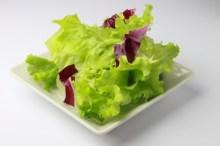 レタス 栄養 効能