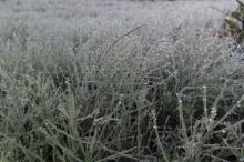 初冬の候 意味