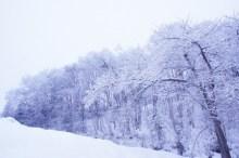 酷寒の候 意味