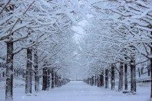 寒風の候 意味