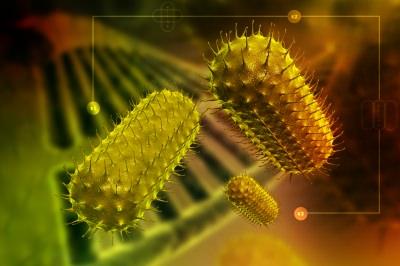 ウイルス 細菌 真菌 違い