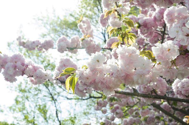 春陽の候の読み方と意味!時期はいつ?時候の挨拶を含む例文も!