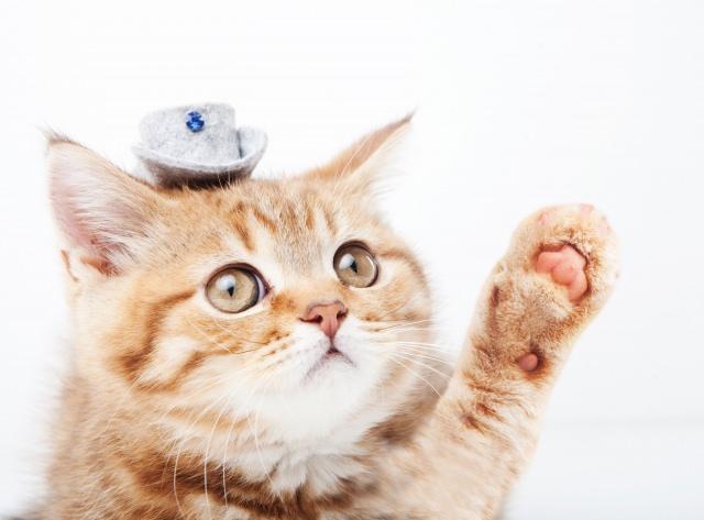 猫アレルギー 症状 原因 治療