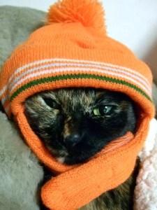猫がニット帽を被る