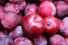 image of plums from o at Cortijo Las Viñasur garden