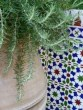 image of rosemary in antique pot and traditional Andalucian tiling villa info