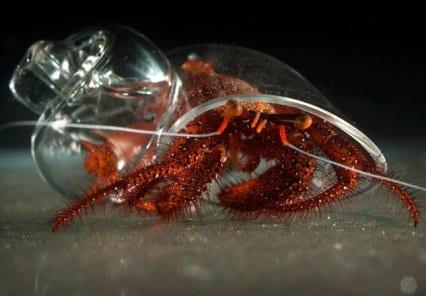 caracola-cristal