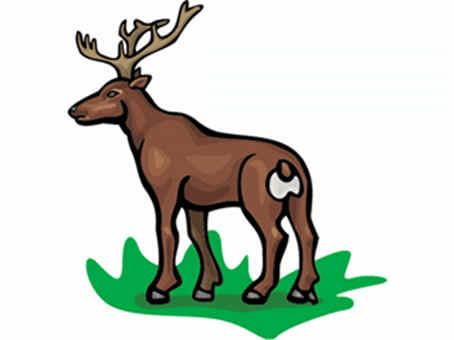 ciervo sacrificado granja