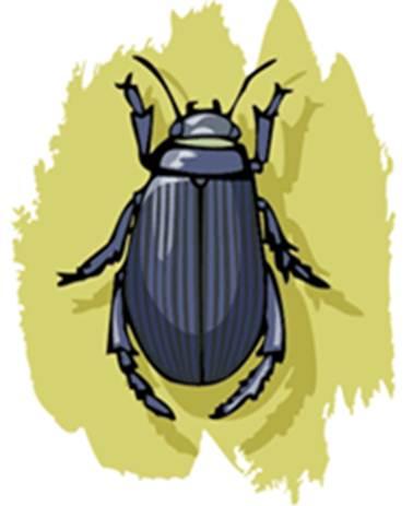 escarabajoy hormiga