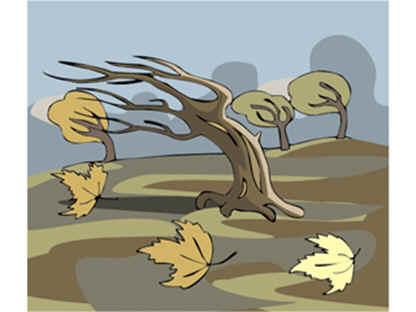 arbol derribado por el viento