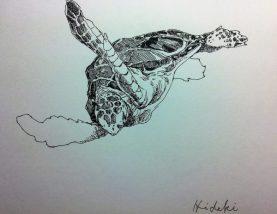 ウミガメの絵