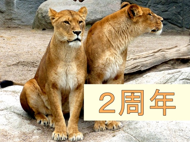 2頭のライオン