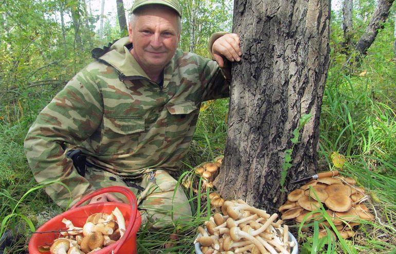 Картинки и названия несъедобных грибов
