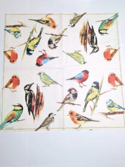 Pájaros desplegado