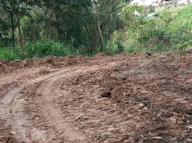 """Más de mil carrizaleños exigen frenar """"ecocidio"""" en bosque altomirandino"""