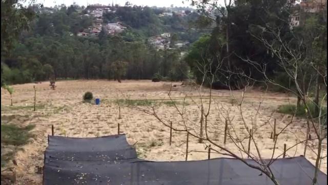 Carrizaleños denuncian que iniciaron siembra de café en terrenos deforestados violando el PDUL