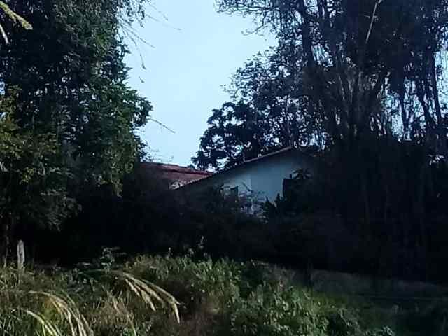 Maleza amenaza con incomunicar a vecinos de calle Cecilio Acosta en Carrizal