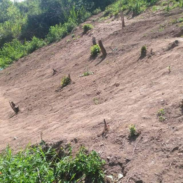 Vecinos del sector El Retén de la capital mirandina denuncian deforestación de terreno