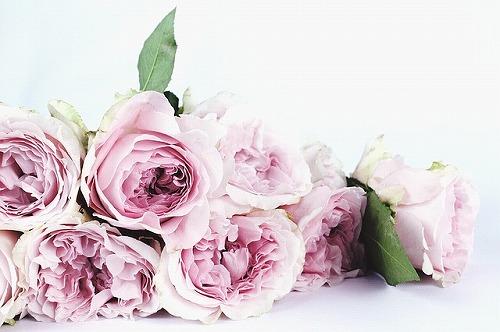 s-flower-1522242_640