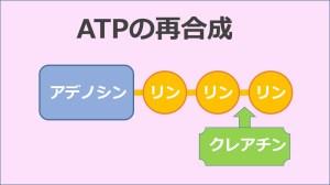 ATP再合成