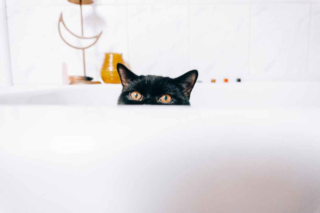 curious cat peeping out of bathtub at home