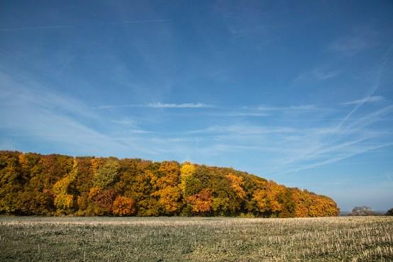 Herbstwald bei Perl