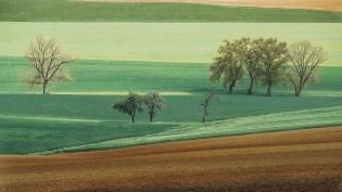 Baumgruppe im Feld