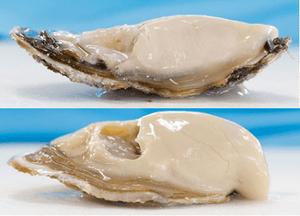 小長井牡蠣と華漣の比較